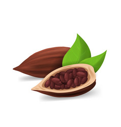 realistic detailed 3d dry cocoa pods vector image
