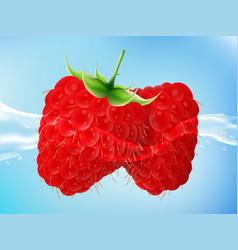 tasty ripe raspberry in clean water vector image