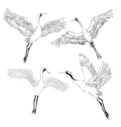 Watercolor set of bird crane white stork vector