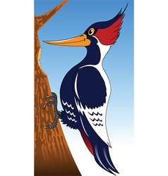 woodpecker cartoon vector image vector image