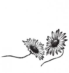 Antique daisies engraving vector
