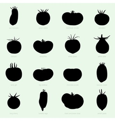 Different sorts of tomatoes vector image vector image