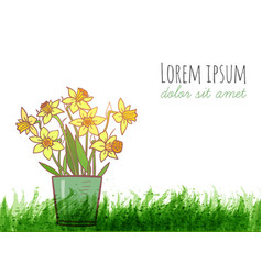 Bouquet of yellow daffodiles and green grass vector