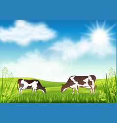 Cows grazing in a summer meadow vector
