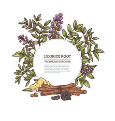 Medicine plant licorice herb with root flower vector