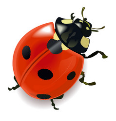 Red ladybug vector