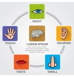 Five human senses smell sight hearing taste vector image vector image