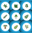 flat icon nature set of leaves acacia leaf vector image vector image