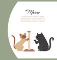 funny cartoon cats scratching claw sharpener vector image
