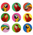 round stickers with ara parrots vector image