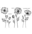 set cosmos poppy california poppy flower vector image vector image