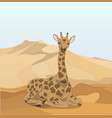 giraffe in the desert vector image