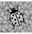 lady bug decorative of doodle insect vector image