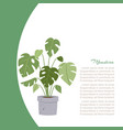 monstera interior home plant tree in pot vector image vector image