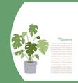 monstera interior home plant tree in pot vector image