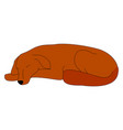 sleeping dog on white background vector image