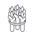 asparagus line icon sign on vector image
