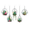doodle hanging terrarium succulents and cactuses vector image vector image