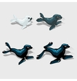 Four different sea lion white grey and blue vector image vector image