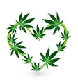 heart shape with cannabis leafs icon design vector image