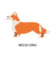 pembroke welsh corgi small cute lovely dog of vector image vector image