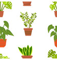seamless pattern with house plants vector image
