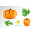 set vegetable pumpkins with green leaves isolated vector image vector image