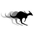 kangaroo effect vector image vector image