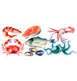 watercolor fresh fish and mollusc from sea vector image vector image