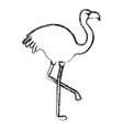exotic flamingo tropical bird vector image vector image