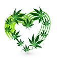 heart shape with cannabis leafs icon design vector image vector image
