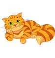 sad fat cat vector image