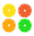 set of citrus in a cut vector image
