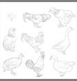 sketch domestic birds vector image vector image