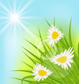 Summer nature background with daisy grass blue sky vector image vector image