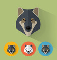 wolf portrait with flat design vector image