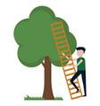 a guy climbs a tree vector image