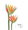 bird paradise graphic card design modern 3d vector image