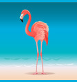 exotic pink flamingo walking on hot summer vector image vector image