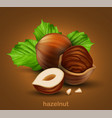hazelnuts with green leaves on a brown background vector image