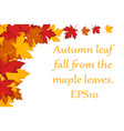 maple leaves background eps10 vector image vector image
