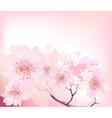 sakura spring cherry tree vector image vector image