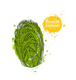 chinese cabbage hand drawn in the vector image vector image
