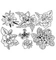 set top view flowers with leaves vector image vector image