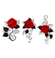 three red roses for tattoo vector image vector image