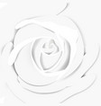 white rose close-up background vector image vector image