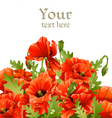 Beautiful banner with red poppies for your message vector image