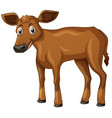 cow cub with brown fur vector image vector image