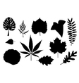 leaf collage vector image vector image