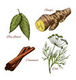 sketch icons of spice and herb seasonings vector image vector image
